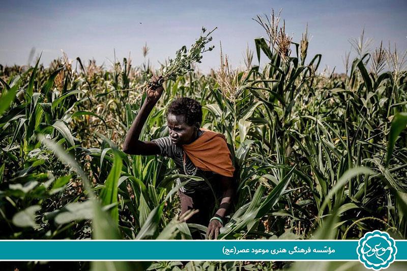 افریقایی - 2.1 میلیون نفر در کنیا گرسنه هستند